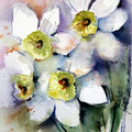 daffodils III (O2) / Watercolour 15x20cm on Arches CP  © janinaB. 2016