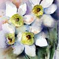 daffodils III (O1) / Watercolour 15x20cm on Arches CP  © janinaB. 2016