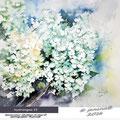 hydrangea II / Watercolour 34x40cm Arches CP © janinaB. 2016