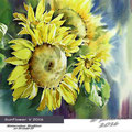 Sunflower V 2016 / Watercolour 30x40cm  on Arches CP © janinaB. 2016