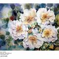 Rosen XXI / Aquarell 30x40cm auf Arches HP © janinaB.