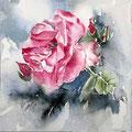 Roses VIII 2016 / Watercolour 17x20cm  Arches CP  © janinaB. 2016