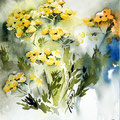 Tansy I / Watercolour 17x20cm  Arches CP © janinaB. 2016