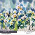 daisies VI / Watercolour 30x40cm  on Arches CP © janinaB. 2016