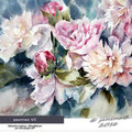peonies VI / Watercolour 30x40cm on Arches CP © janinaB. 2016