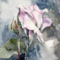rose IV 2016 / Watercolour23x20cm Arches CP © janinaB. 2016