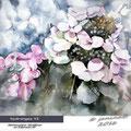 hydrangea VI (10) / Watercolour 30x40cm on Fabriano CP © janinaB. 2016