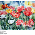 Mohnwiese I (M1) / Aquarell 75x55cm auf Fabriano © janinaB. 2016