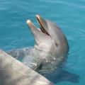 """2014-01-02 Grand Cayman / Cayman Islands - CAY:  """"Flipper? """" - © reinhard uhlich"""