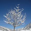 """2009-12-26 Bad Hofgastein - AUT:  """"Stephanie-Tag - oder doch Winter? """" - © reinhard uhlich"""