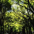"""2007-10-28 Manhattan / New York - USA: """"Central Park"""" - © reinhard uhlich"""