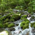 斜面の湧水群