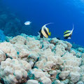 @ Panorama Divers