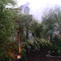 Palmengarten des Künstlers Michael Pendry (2)