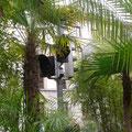 Palmengarten des Künstlers Michael Pendry (1)