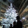 1階には特大のクリスマスツリーが ステキでした。