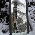 Spiegel Helmskink - verwunschener Baum nicht inklusive