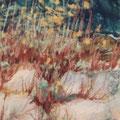 rocailles et lichens