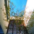 中庭から竹と空を見る