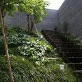 森の中にいるような中庭と枕木の階段