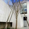 シンボルツリーと目隠し塀。正面2階は洗面室