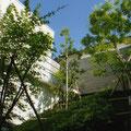 傾斜庭の緑から青空を見上げる