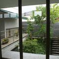 リビングより緑の散歩道のような前庭を見る