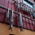 Überall auf den Lofoten wird Stockfisch getrocknet
