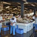 Marchés aux poissons, Dubai