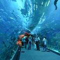 Aquarium dans le Dubai Mall, Dubai