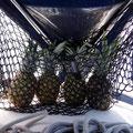Ananas haben noch Zeit zum Reifen