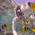 Kommen die Schmetterlingsfische ganz nah und fressen aus der Hand