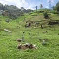 Friedhof fast ohne Grabsteine, dafür mit Ziegen und Schafen