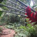 Die schönen Blüten hängen sogar über den Weg