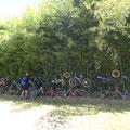 Fahrradkunst am Zaun