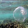 Und tauchen in die Unterwasserwelt ein