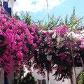 Gasse mit Blumen