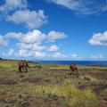 Überall sieht man Pferde, selten Kühe