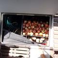 Unser Zwiebel und Kartoffelvorräte