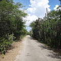 Die Straßen gesäumt von stacheligen Pflanzen