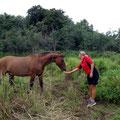 Wir bringen den Pferden unser altes Brot