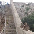 Auf den Stufen rasten die Affen