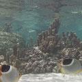 Tausende Fische