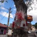 An den Bäumen noch der Weihnachtsschmuck