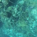 Im Korallenriff hunderte bunte Fische