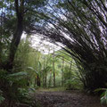 Bambus und Palmen prägen den Wald