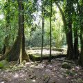 Marea im Wald