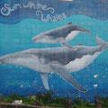 Wale Watching ist hier inn