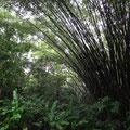 Ausflug in den Chaguaramas Naturpark