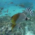 Fische sind gar nicht so leicht zu fotografieren